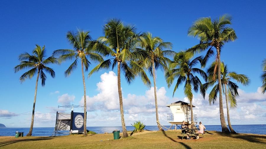 Palmen am Strand von Haleiwa auf Oahu, Hawaii, wo die World Surf League Wettkämpfe stattfinden